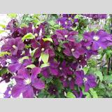 pflegeleichte Pflanzen /Blütenrausch