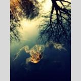 Natur /Kröte im Wasser und Himmel