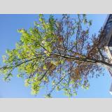 Umwelt /Frühjahr im Herbst