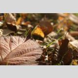 Blätter /Herbst-Blatt