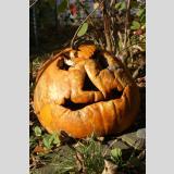 Halloween /13. November...