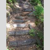 Auf- und Absteigen /Treppen im Wald