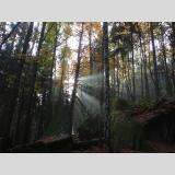 Phenomenal /Sonnenstrahlen im dunklen Wald