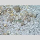 Fische /kaum zu entdecken