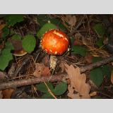 Pilzesammlung /das Leuchten im Dunkeln