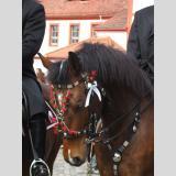 Ostern /Pferd vom Osterreiter