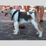 Tierwelt /ein Hund in der sommerlichen Stadt
