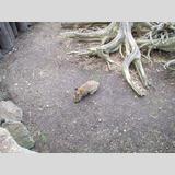 Tierwelt /Graues Kaninchen