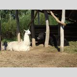 Tierwelt /Schwarz unfd Weiß