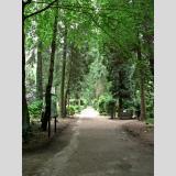 Bäume und Büsche 3 /Waldfriedhof / 01