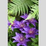 pflegeleichte Pflanzen /Liebelei