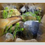 Wasser /Zwischen den Steinen