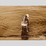 Wasser /Seehund?