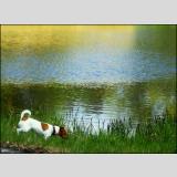 Wasser /Der kleine Hund