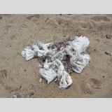 Strandfunde / 2 /Müll am Strand / 01