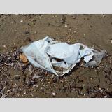 Strandfunde / 2 /Müll am Strand / 03