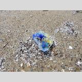 Strandfunde / 2 /Müll am Strand / 02