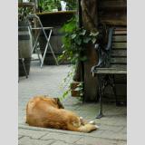 Haustiere /Im Gartenlokal