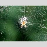 Tiere / 03 /Spinnennetz / 02