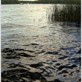 Wasser /Blick über das Wasser