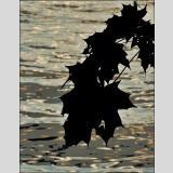 Formen und Farben II /Blätter in Schwarz
