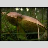Unterwegs /Der Pilz