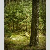 Unterwegs /Im Wald