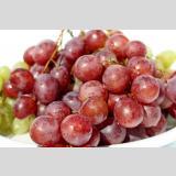Früchte und Obst /Rote Weintrauben