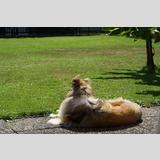 Tierwelt /Ein Collie auf der Terrasse