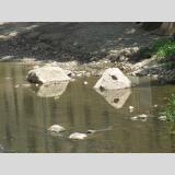Steinig /im Wasser gespiegelt