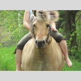 Auf dem Rücken der Pferde /im Galopp
