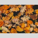 Blattwerk /Herbstlaub