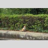 Tierwelt /Fuchs in der Stadt