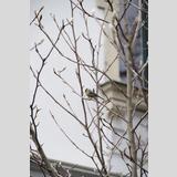 Vögel /Kleine Meise