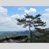 Bäume /Einsamkeit