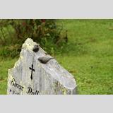 In stiller Trauer /Vögelchen auf dem Grabstein