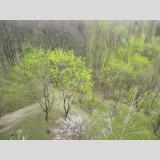 Im Wald /Wald im Frühling