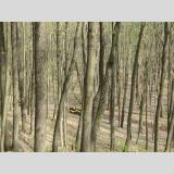 Sport mit Motor /Quad im Wald