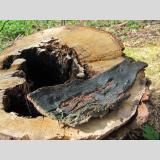 Holz /Abgesägt und angesengt