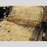 Holz /Schnittkante