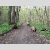 Im Wald /Für den Waldspazeirgang