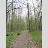 Im Wald /gut zum Laufen