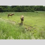 Freizeit Reiten Natur /Pferde