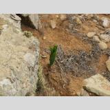 Blattwerk /Grünes zwischen den Steinen