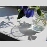 Gläser /als Vase
