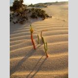 Wüstenlandschaften /Im Schatten der Düne