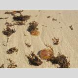 Ohne Knochen /Zwei im Sand