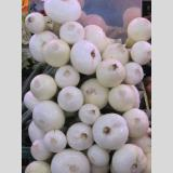 Gesundes Gemüsiges /Zwiebel in Weiß