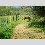 Freizeit Reiten Natur /Pferdetritt