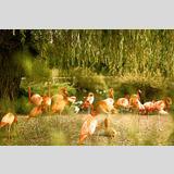 Tiere /Flamingos